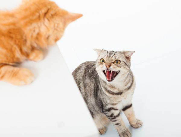 Comment faire cohabiter 2 chats